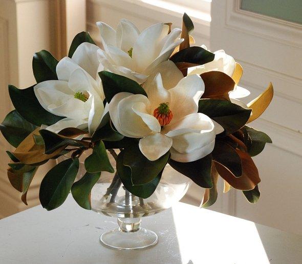 magnolias  so sumptuous
