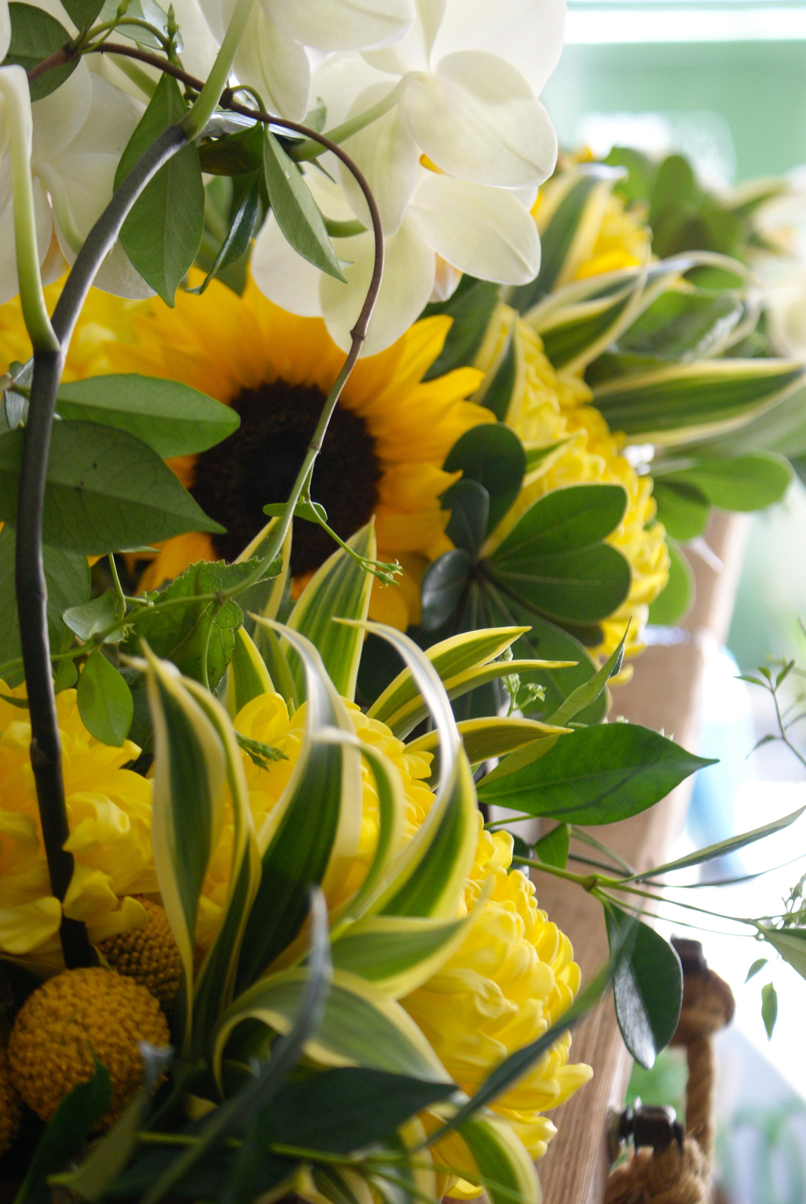Happy yellow flowers milkweed and maple sony dsc sony dsc mightylinksfo