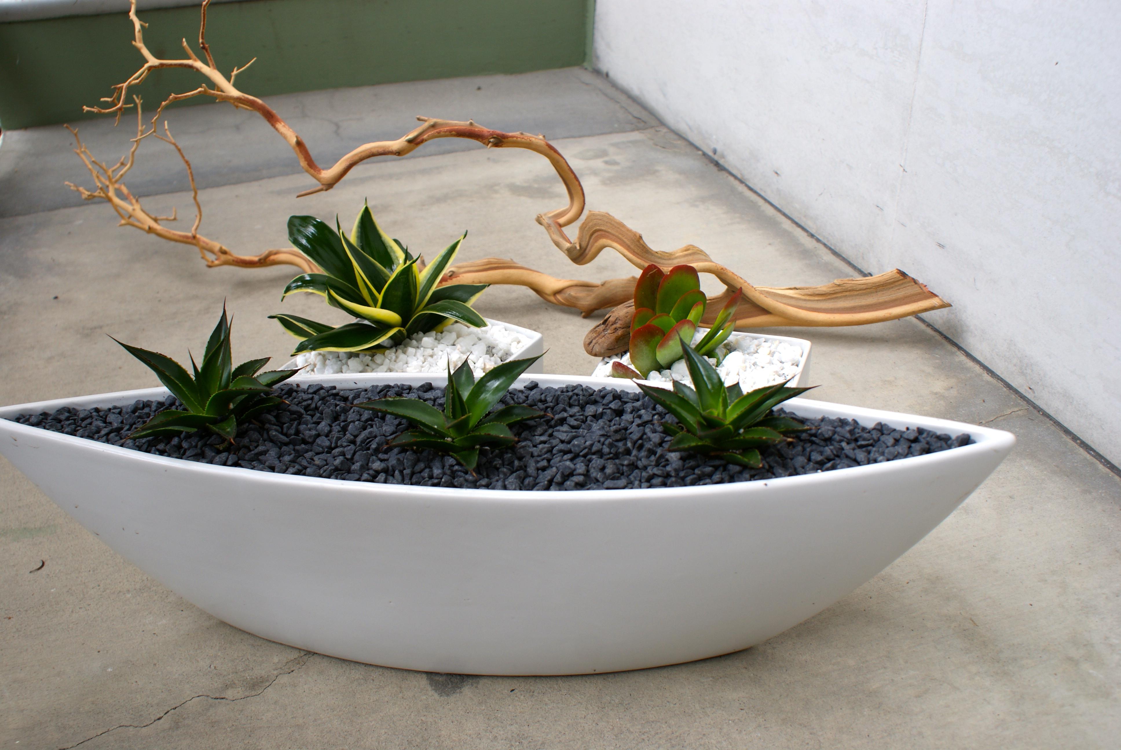 Succulent Plant Milkweed And Maple